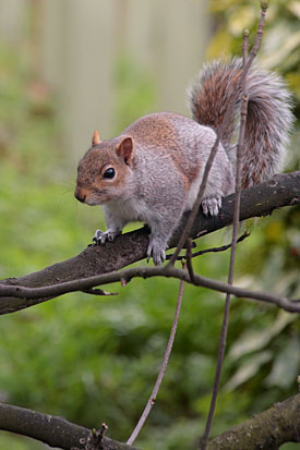 19,456-Squirrel.jpg